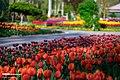 Chamran park 2020-04-06 10.jpg