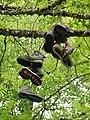 Chaussures sur un arbre @ Seynod (50884730501).jpg