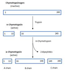 Structural Biochemistry/Volume 6 - Wikibooks, open books for