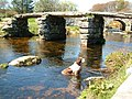 Clapper Bridge at Postbridge, with dog cooling - geograph.org.uk - 1742550.jpg
