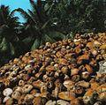 Coconut pile Seychelles.jpg