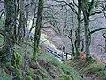 Coed Tynycastell - geograph.org.uk - 577827.jpg