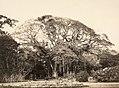 Collectie Nationaal Museum van Wereldculturen TM-60062117 Grote boom in de botanische tuin van Port of Spain Trinidad en Tobago fotograaf niet bekend.jpg