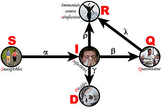 Forensic epidemiology - Image: Compartmental Model