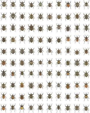 Entomology - These 100 Trigonopterus species were described simultaneously using DNA barcoding