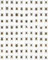 Compilation of 100 Trigonopterus species - 1742-9994-10-15-3.png