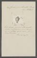 Conus puncturatus - - Print - Iconographia Zoologica - Special Collections University of Amsterdam - UBAINV0274 085 10 0013.tif