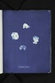 Corynephora marina (NYPL b11861683-419552).tiff