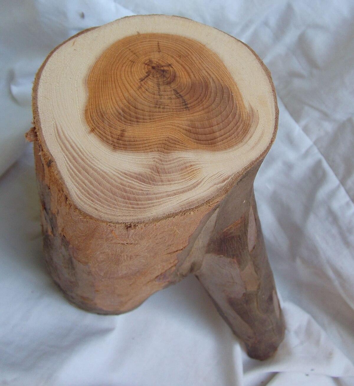 Aubier wiktionnaire - Coupe transversale d un tronc d arbre ...