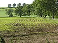Crops starting to show - geograph.org.uk - 1396689.jpg