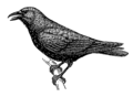 Crow 1 (PSF).png