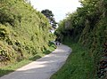 Cutting on the Camel Trail (3) - geograph.org.uk - 1286384.jpg