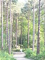 Cycling in Bedgebury Forest - geograph.org.uk - 797009.jpg