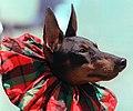 DOG-PINCHER C 30APR00.jpg