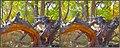 DSCF9223=2-Stereo Photo-3D - Flickr - relaxednow.jpg