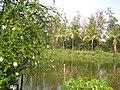 Dadra Garden, Dadra - panoramio.jpg