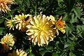 Dahlia @ Parc Floral @ Paris (29861454740).jpg