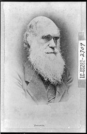 Οι θεωρίες του Δαρβίνου έιχαν καθοριστικό ρόλο σε πολλές επιστήμες.