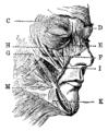 DarwinAusdruck02.png