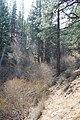 Davis Creek Park - panoramio (30).jpg