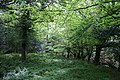Deciduous woodland by the Owengarriff River - geograph.org.uk - 449903.jpg