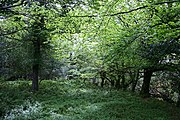 Deciduous woodland by the Owengarriff River - geograph.org.uk - 449903