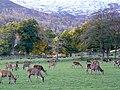 Deer Farm at Inchmore - geograph.org.uk - 1031698.jpg