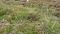 Deer Fence (An Sgòr Dubh) on Mar Lodge Estate (29JUL17) (4).jpg