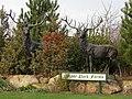 Deer at Manor Park Farms - geograph.org.uk - 668664.jpg