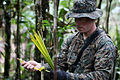 Defense.gov News Photo 100803-M-9093S-059 - U.S. Marine Corps Sgt. Travis D. Nessel with 3rd Assault Amphibian Battalion marks a path with yellow palm tree leafs during jungle warfare.jpg