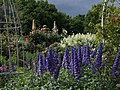 Delphiniums and Friends (48086802222).jpg