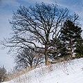 Deming Heights Park, Minneapolis 4 5 18 -tree -hillside -spring -snow (41273318582).jpg
