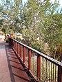 Desert Botanical Garden - panoramio (2).jpg
