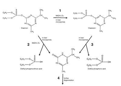 Mechnism for diazinon in vivo.