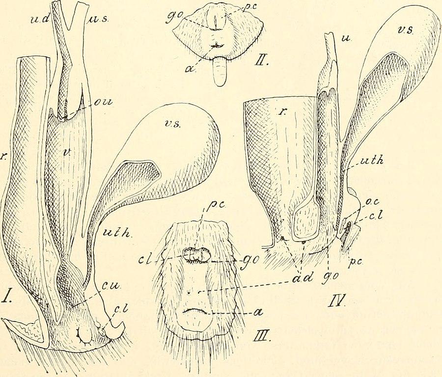 Großzügig Anatomie Für Anfänger Reproduktion Galerie - Anatomie ...
