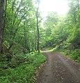 Dilijan National Park, Path way to Aghavnavank 36.jpg
