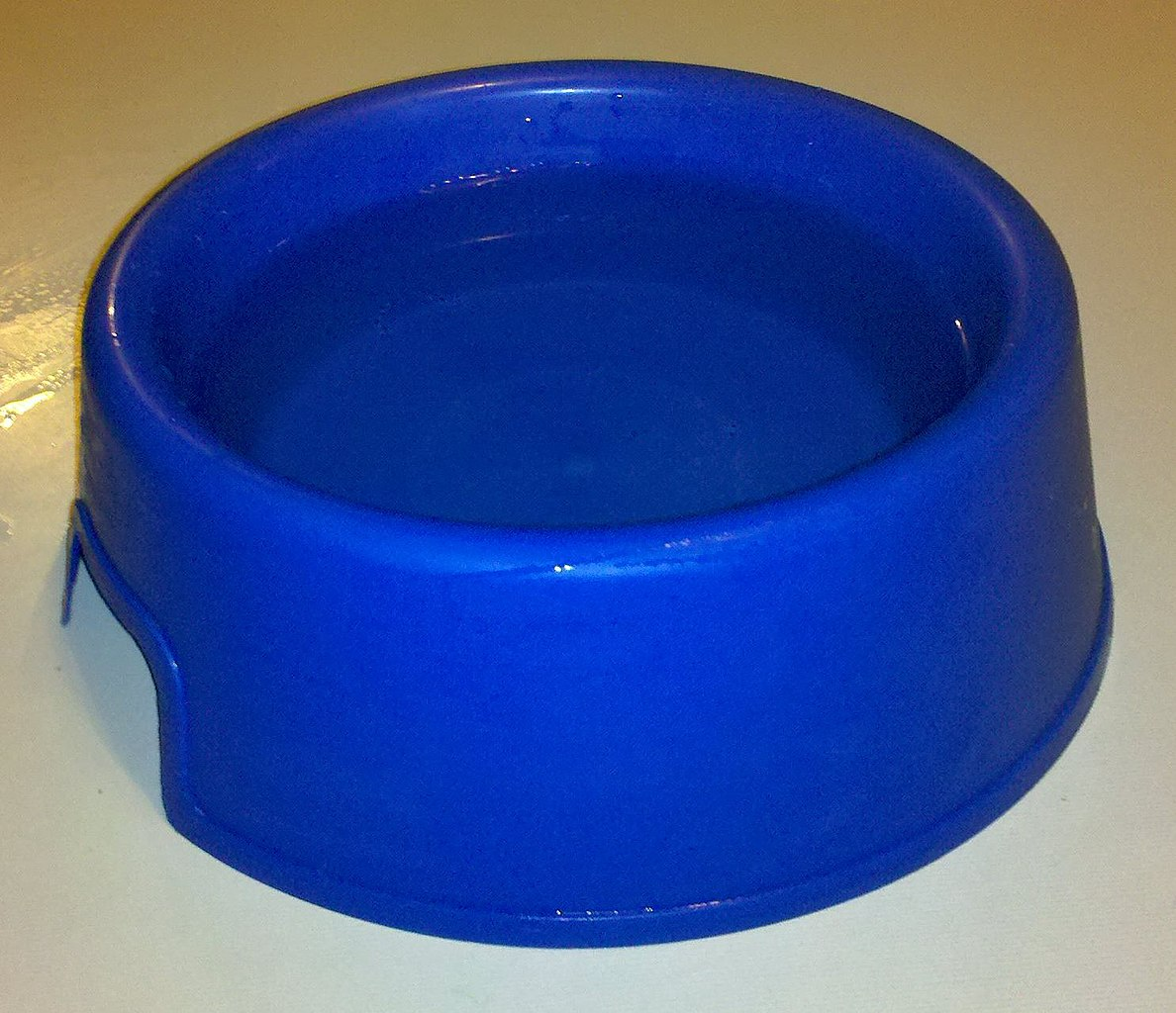 Dog Water Bowl For Messy Drinkers Uk