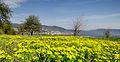 Dojran Lake 230.jpg
