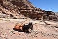 Donkey in Petra, Jordan.jpg