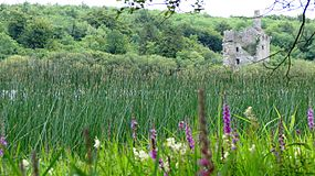 Dromore Castle lakeview.JPG
