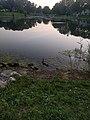 Ducks at Cottonwood Park.jpg