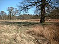 Dunham Park - geograph.org.uk - 28848.jpg