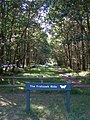 Eastern end of the Frohawk Ride, Parkhill Inclosure, New Forest - geograph.org.uk - 208135.jpg