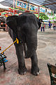 Elefantes, Ayutthaya, Tailandia, 2013-08-23, DD 09.jpg