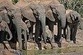 Elephants-Słonie.jpg