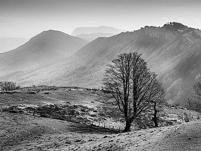 Landscape of the Entzia mountain range; a beech, haze. Álava, Basque Country, Spain