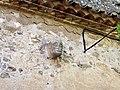 Esglesia St Marti - detall cara posterior.jpg