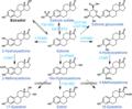 Estradiol metabolism 1.png