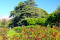 Exposition Park Rose Garden, Exposition Blvd. at Vermont Ave. University Park 21.jpg