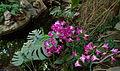 Exposition mille et une orchidées 10.jpg